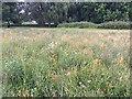 SP2964 : Sown wildflowers, St Nicholas Park, Warwick by Robin Stott
