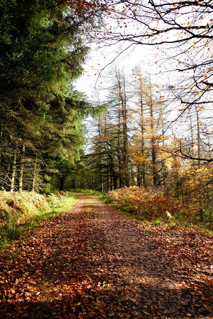 Track to Tinker Hills Plantation