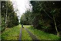 NZ0428 : Minor Forestry track on Pennington Rake by Andy Waddington