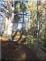 NY7147 : Picnic site beside the South Tyne Trail by Oliver Dixon
