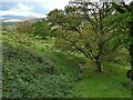 SD1096 : Stream below the terrace at Muncaster by Stephen Craven