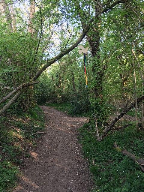 Path through Small's Copse by Sandy B
