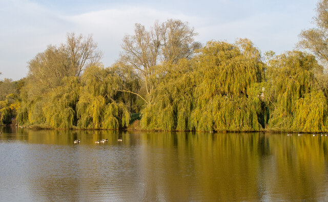 Willows and Childerditch Church Lake