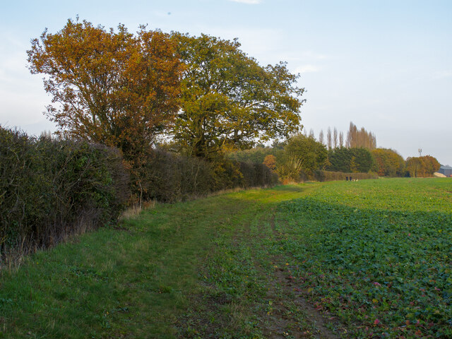 Footpath on arable field margin, Little Warley
