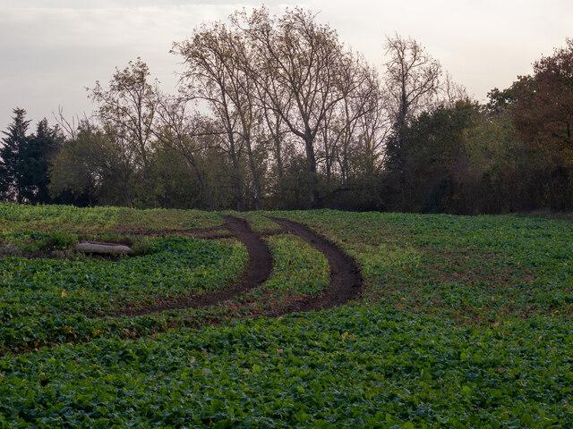 Tractor tracks on arable field, Little Warley