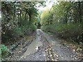 SK3606 : Private track heading west through woodland by Christine Johnstone