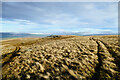 NY9635 : Cairn on Carrs Top by Andy Waddington