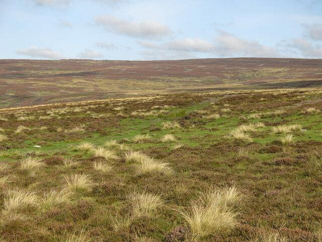 Moorland above Shittlehope Edge