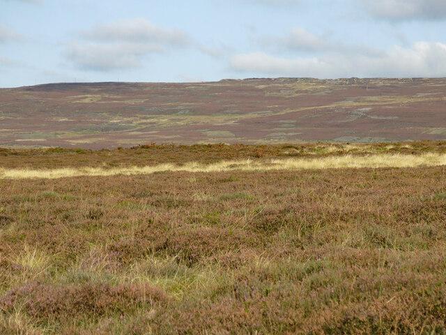Moorland east of Shittlehope Edge
