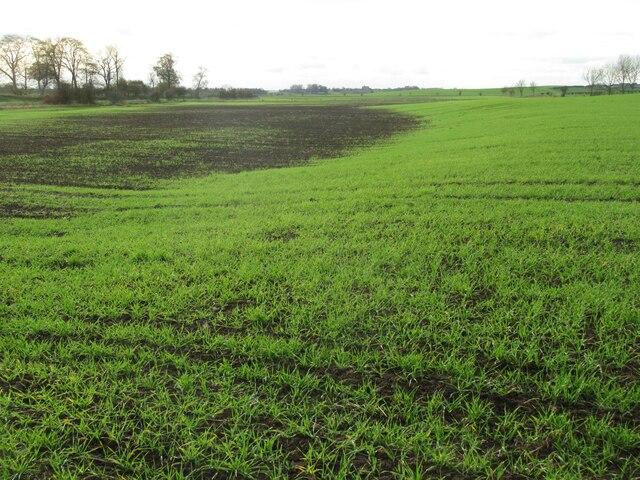 Effect of flooding on Leetside crop on West Newton