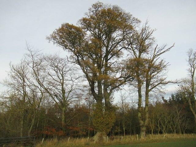 Mature trees on West Newton