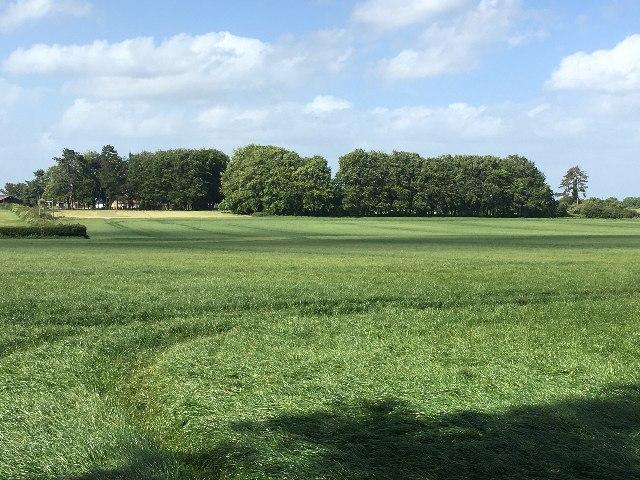Fields east of Pardown by Sandy B