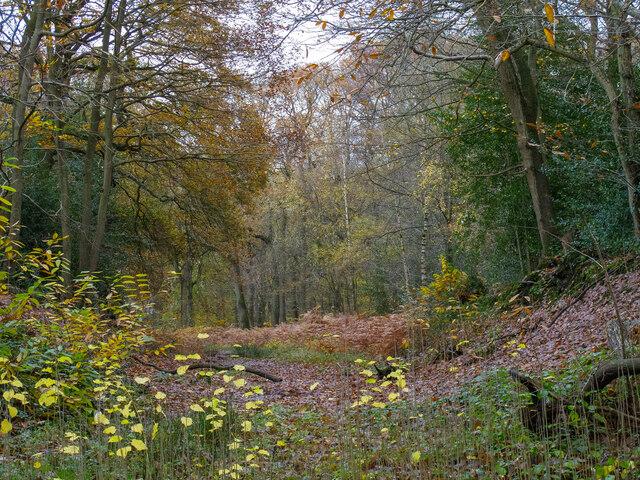 Scrubs Wood on a rainy autumn day
