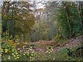 TL7805 : Scrubs Wood on a rainy autumn day by Roger Jones