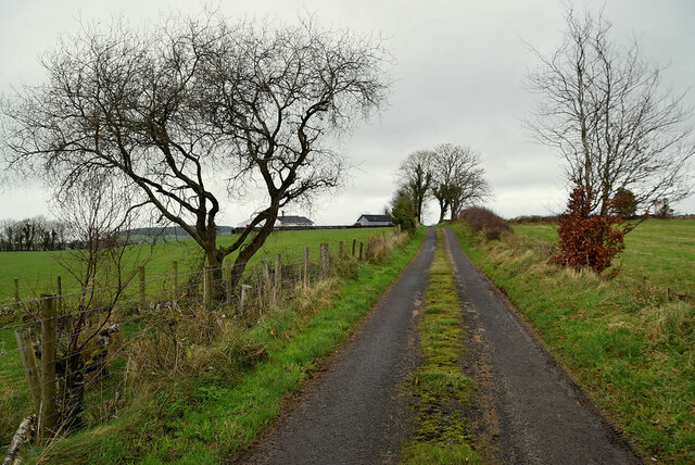 Bare trees along a minor road, Bomackatall Upper