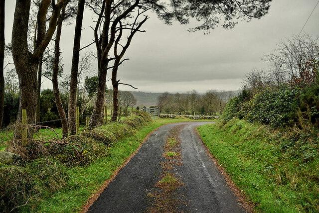 Scots pine along a minor road, Bomackatall Upper