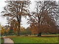 SK2571 : Late Autumn colour in Chatsworth Park by Graham Hogg