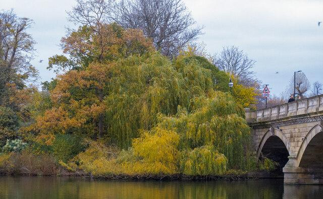 Autumn Colours near The Serpentine Bridge, Kensington Gardens