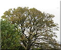 NT2470 : Sycamore leaf fall - 2020 - 5 November by M J Richardson