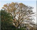 NT2470 : Sycamore leaf fall - 2020 - 12 November by M J Richardson