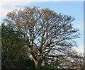 NT2470 : Sycamore leaf fall - 2020 - 16 November by M J Richardson