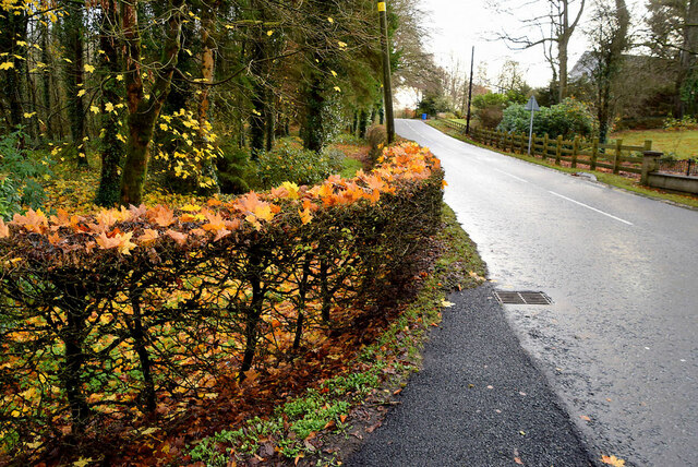 Leaves caught on bare hedge along Crevenagh Road