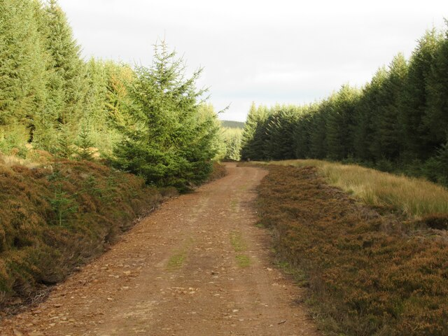 Track in Harecleugh Forest