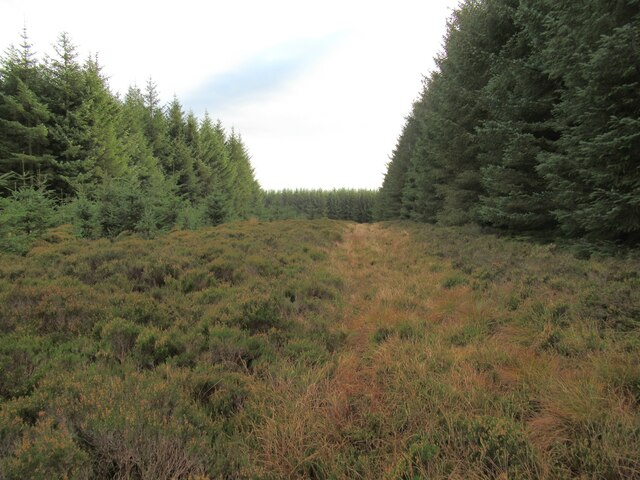 Forest ride with vestigial track in Harecleugh Forest