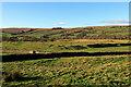NY8986 : Habitancum (Risingham) Roman Fort  by Andrew Curtis