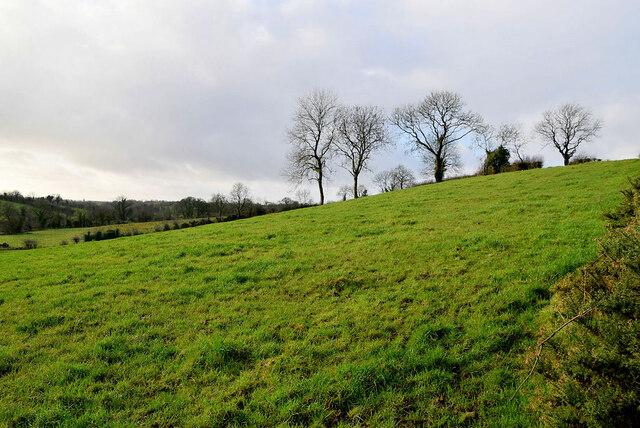 Trees on a hillside, Garvagh