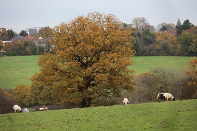 Horses in Field as seen from Trent Park towards Vicarage Farm by Christine Matthews