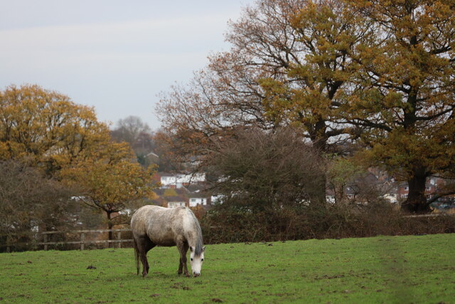 Horse in Field as seen from Trent Park towards Vicarage Farm by Christine Matthews