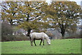 TQ3097 : Horse in Field as seen from Trent Park towards Vicarage Farm by Christine Matthews