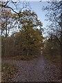 TF0821 : The Oak on the corner by Bob Harvey