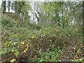 SK3523 : Path into Richard Gilbert's limeyard, Ticknall by Christine Johnstone
