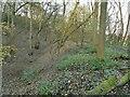 SE1744 : Old railway embankment in Milner Woods by Stephen Craven