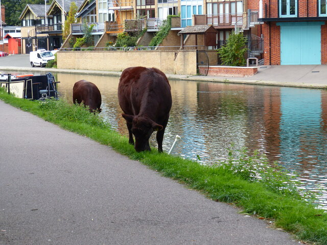 An unexpected sight by the River Cam, Cambridge