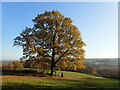 TQ6532 : Lone tree above Bewl Water by Marathon