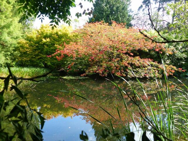 Lake, and colourful shrubs, Cambridge University Botanical Garden