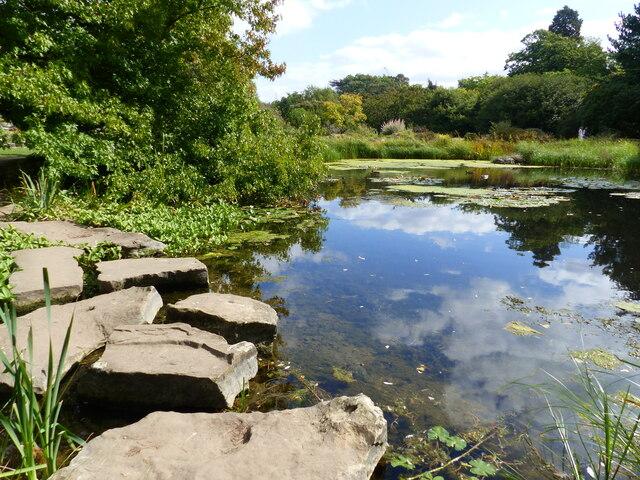 Lake and stepping stones, Cambridge University Botanical Garden