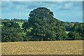 NZ0714 : Rokeby : Field by Lewis Clarke