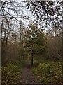 TF0820 : Young Oak by Bob Harvey