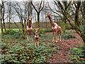 SD8304 : Giraffes at Heaton Park by David Dixon