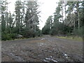 NH7546 : Path in Culloden Forest by Douglas Nelson
