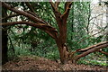 TQ3363 : Croham Hurst by Peter Trimming
