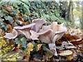 ST1334 : Clouded agaric by Marika Reinholds