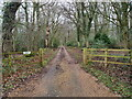 TG3131 : Entrance drive to Witton Hall by David Pashley