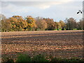 TG3028 : Agricultural field by David Pashley