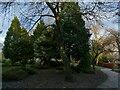 SE2233 : Pudsey Park: conifers by Stephen Craven