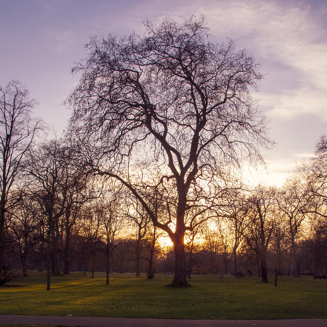 Trees near sundown, Kensington Gardens